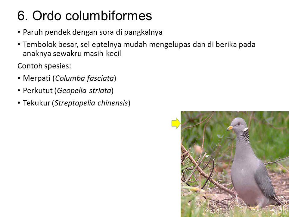 5. Ordo coraciiformes Berparuh besar, kepala besar dan tungkai pendek Pemakan hewan, seperti ikan, udang, katak, kupu-kupu,kumbang, lebah Contoh spesi