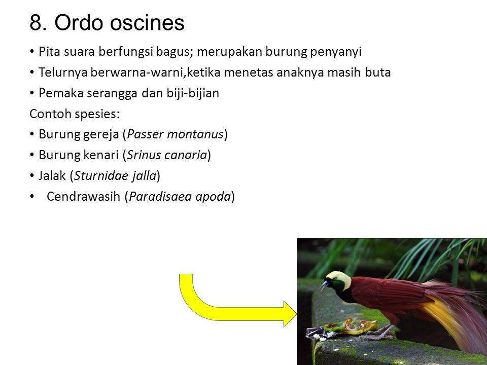 7. Ordo apodiformes Tubuh kecil berukuran 5,6cm Paruh lembek, lidah panjang dan dapat di julurkan; membuat sarang dari ludahnya Contoh spesies: Burung
