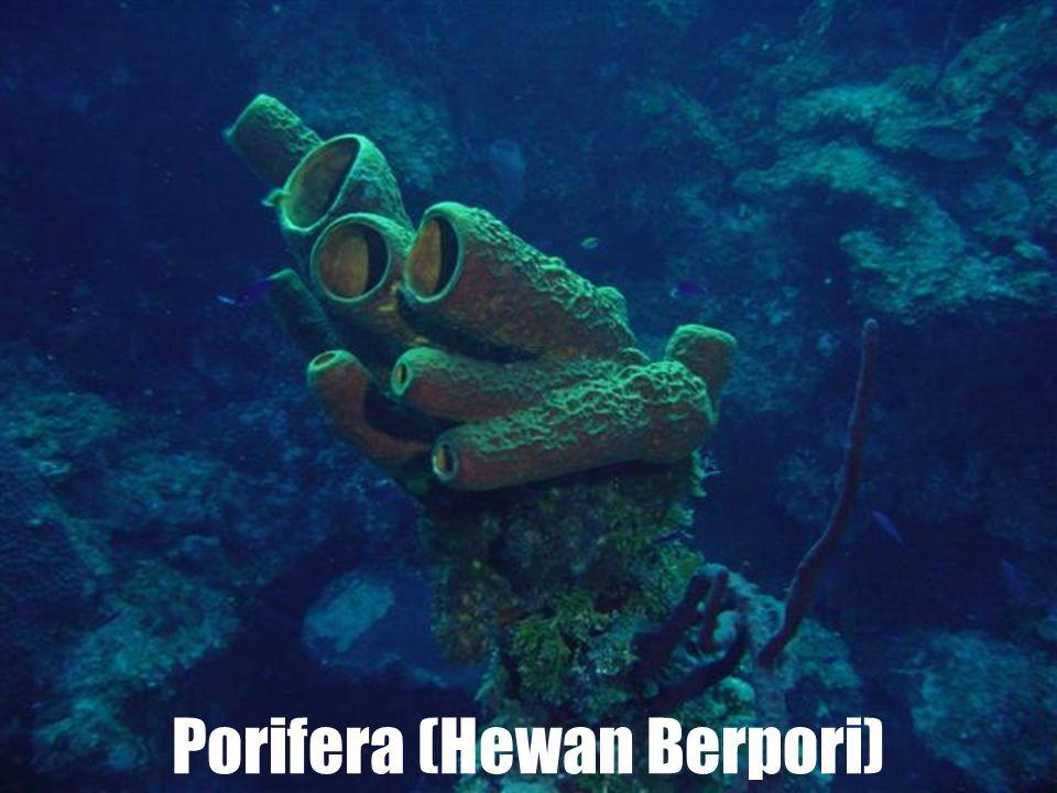 Invertebrata terdiri dari 8 filum: Porifera (Hewan berpori) Coelenterata (Hewan berongga) Platyhelminthes (Cacing pipih) Nemathelminthes (Cacing gilig) Annelida ( Cacing gelang ) Mollusca ( Hewan lunak ) Arthropoda ( hewan kaki berbuku-buku ) Echinodermata ( Hewan berkulit duri )