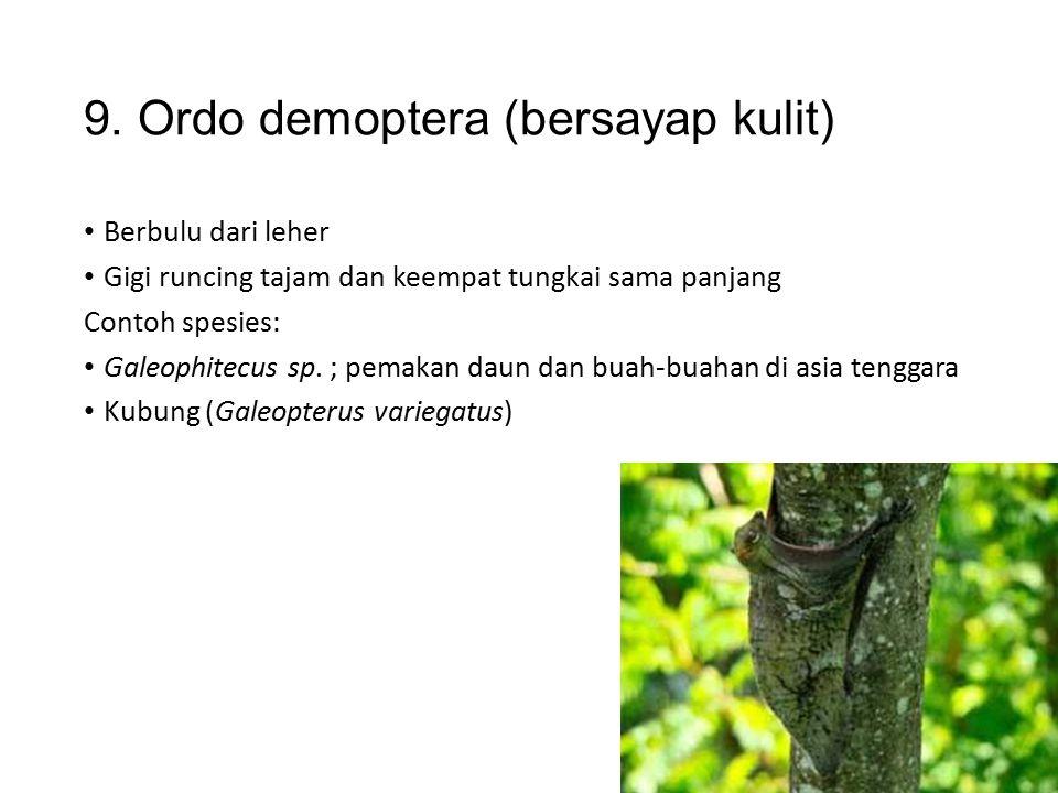 8. Ordo chiroptera (bersayap tangan) Pemakan buah-buahan dimalam hari Gigi runcing tajam, kaki belakang lebih kecil Contoh spesies: Kalong pemakan bua