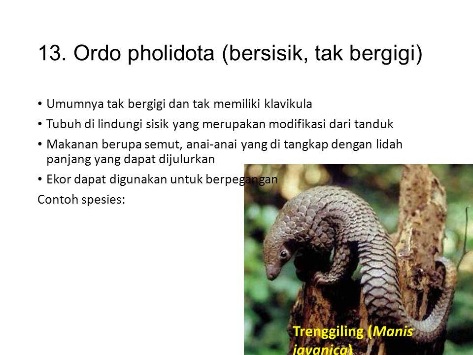 12. Ordo pinnipedia Termasuk carnivor yang tidak terdapat di indonesia Contoh spesies: Singa laut (Zalopus sp.) Gajah laut (Mirounga sp.) Anjing laut