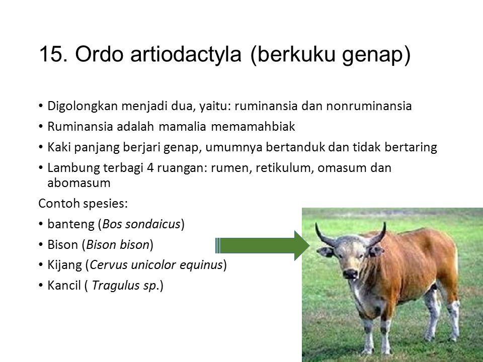 14. Ordo perissodactyla (berjari ganjil) Telapak kaki berjari ganjil, di bungkus kuku dari zat tanduk Tidak bertanduk, lambung sederhana tidak memilik