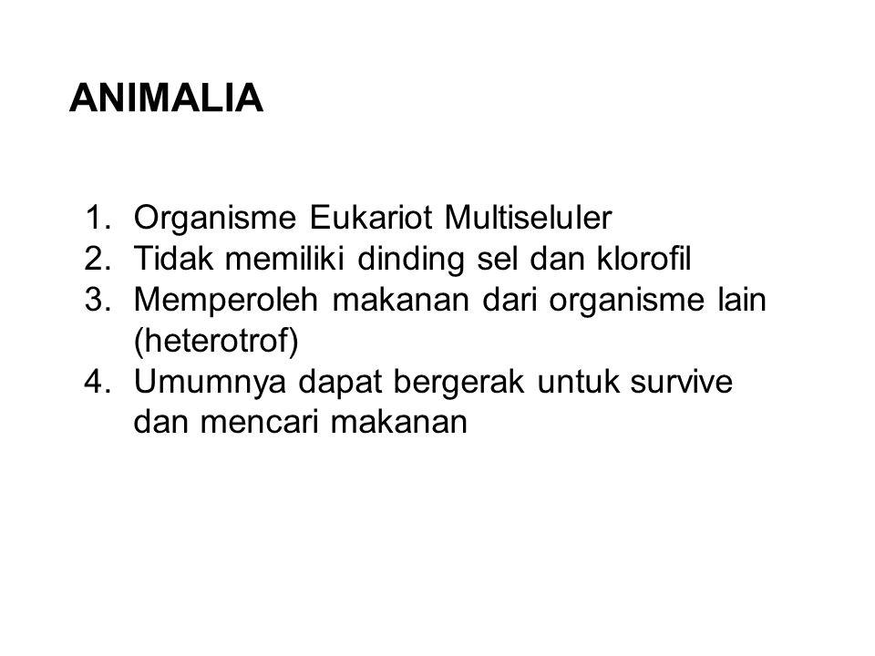 Mollusca (Hewan Lunak)