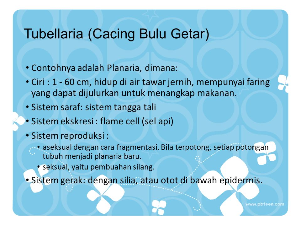 Kelas Platyhelminthes 1.Tubellaria (Cacing Bulu Getar) 2.Trematoda (Cacing Hisap) 3.Cestoda (Cacing Pita)