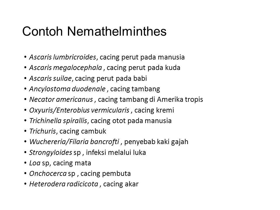 Nemathelminthe s (Cacing gilig)