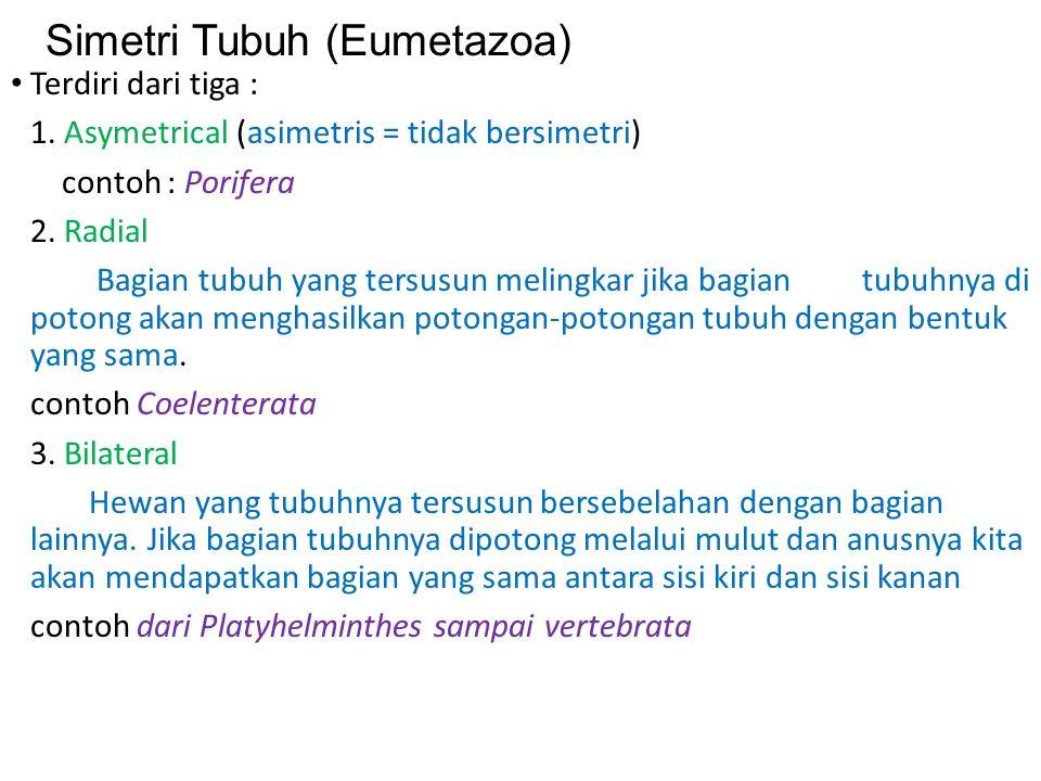 Simetri Tubuh (Eumetazoa) Terdiri dari tiga : 1.