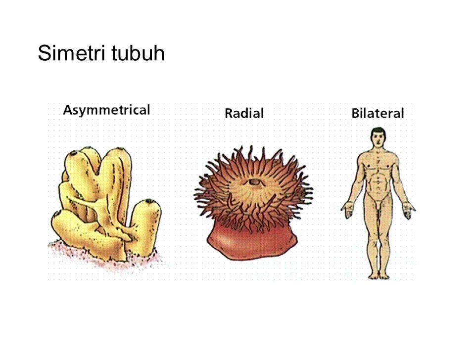 Simetri tubuh
