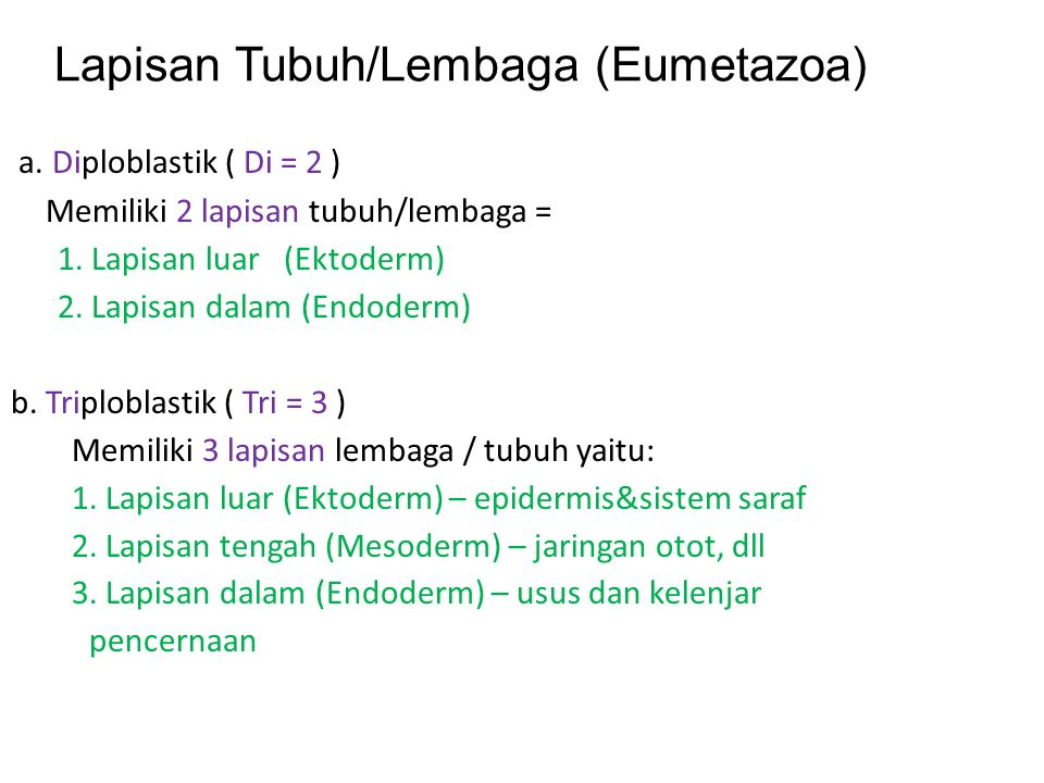 4. Ordo squamata Terbagi menjadi dua, yaitu: 1)Lacertilia 2)ophidia