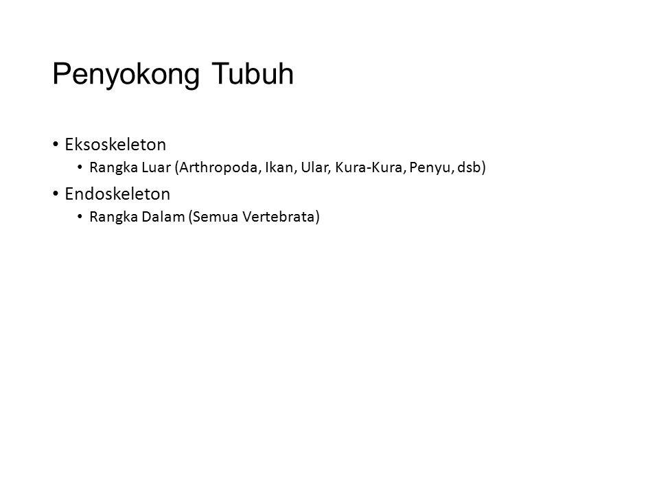 Penyokong Tubuh Eksoskeleton Rangka Luar (Arthropoda, Ikan, Ular, Kura-Kura, Penyu, dsb) Endoskeleton Rangka Dalam (Semua Vertebrata)