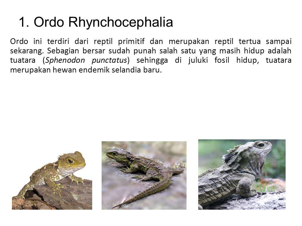 Reptil di bagi menjadi empat ordo: 1.Ordo Rhynchocephalia 2.Ordo Chelonia 3.Ordo Crocodilia 4.Ordo Squamata