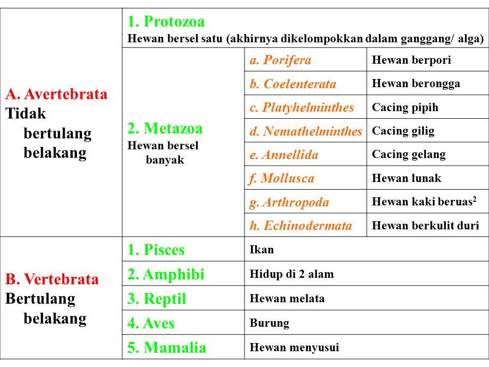 1.Monotremata 2.Insectivora 3.Carnivora 4.Rodentia 5.Lagomorpha 6.Sirenia 7.Cetacea 8.Chiroptera 9.Dermoptera 10.Masupialia 11.Proboscidea 12.Pinnipedia 13.Pholidota 14.Perissodactyla 15.Artiodactyla 16.primata Ordomamalia antara lain: