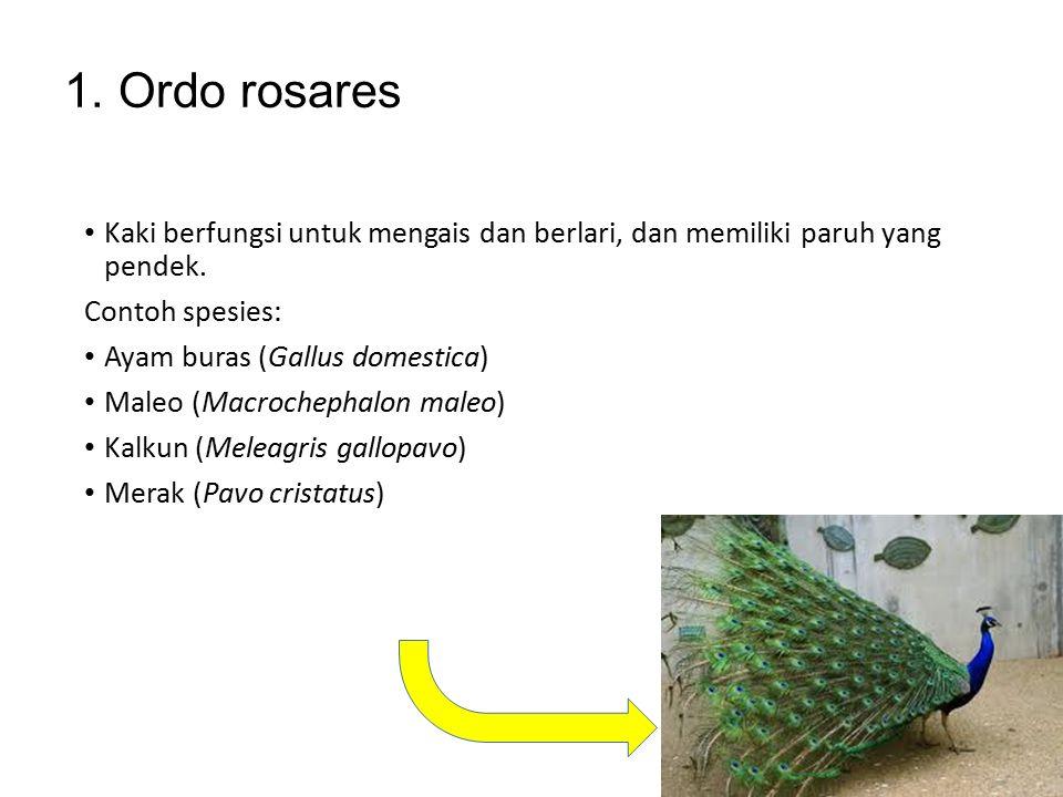 Aves dibagi menjadi 8 ordo: 1.Rosares 2.Ratites 3.Anseriformes 4.Ciconiiformes 5.Coraciiformes 6.Columbiformes 7.Apodiformes 8.oscines