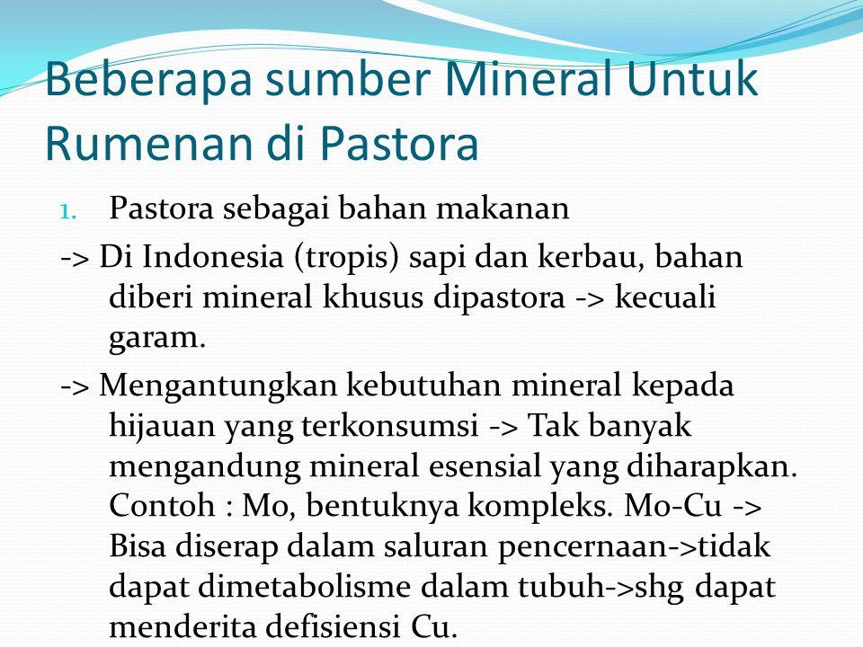 Beberapa sumber Mineral Untuk Rumenan di Pastora 1.