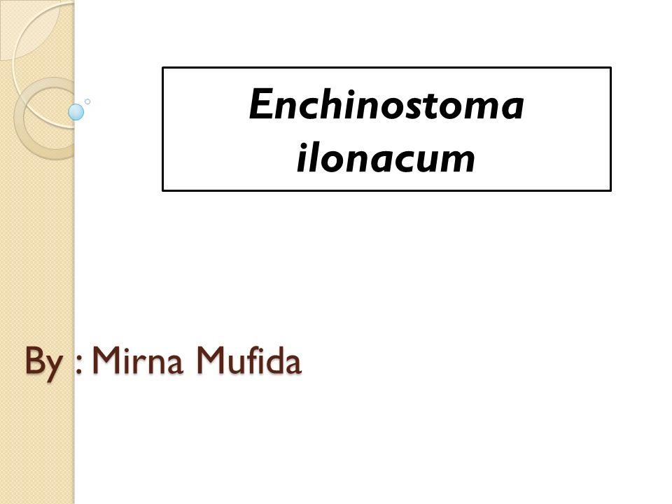 By : Mirna Mufida Enchinostoma ilonacum