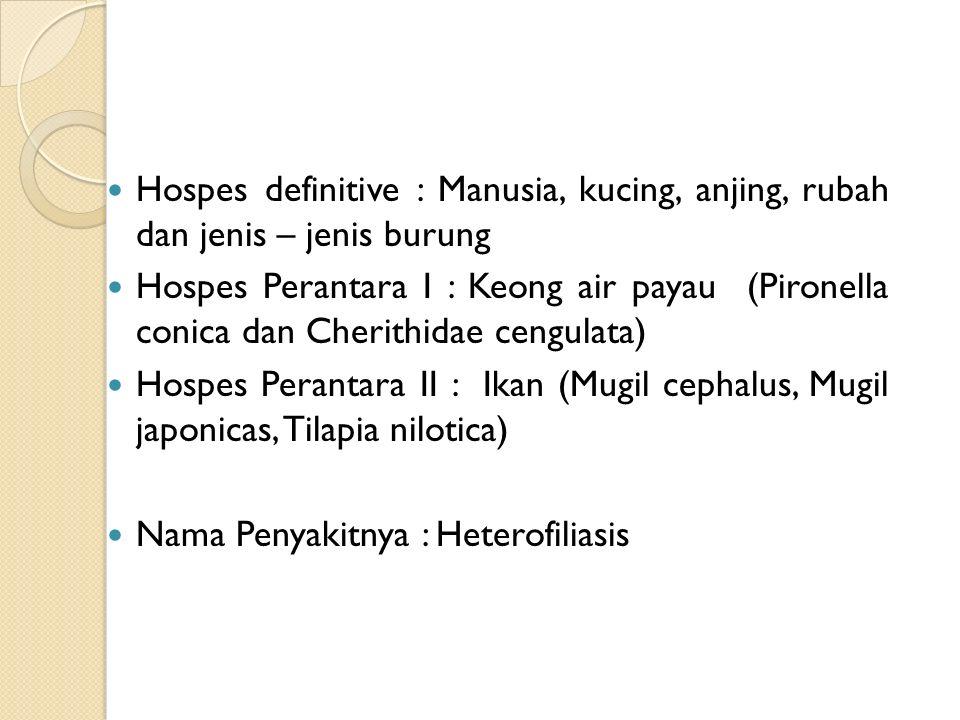 Hospes definitive : Manusia, kucing, anjing, rubah dan jenis – jenis burung Hospes Perantara I : Keong air payau (Pironella conica dan Cherithidae cengulata) Hospes Perantara II : Ikan (Mugil cephalus, Mugil japonicas, Tilapia nilotica) Nama Penyakitnya : Heterofiliasis