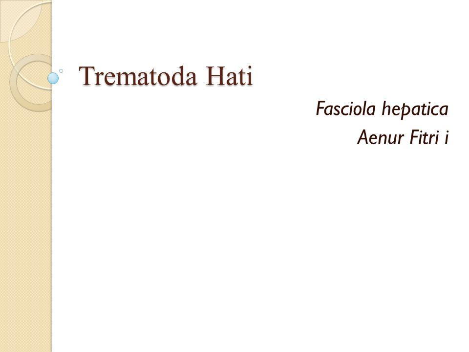 Trematoda Hati Fasciola hepatica Aenur Fitri i