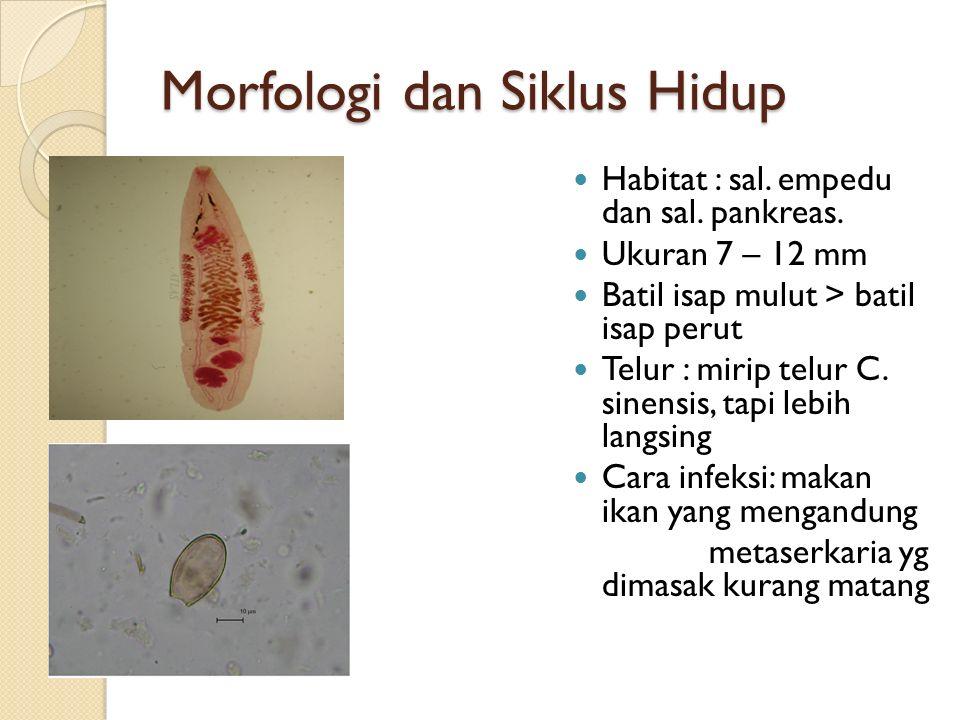 Morfologi dan Siklus Hidup Habitat : sal.empedu dan sal.