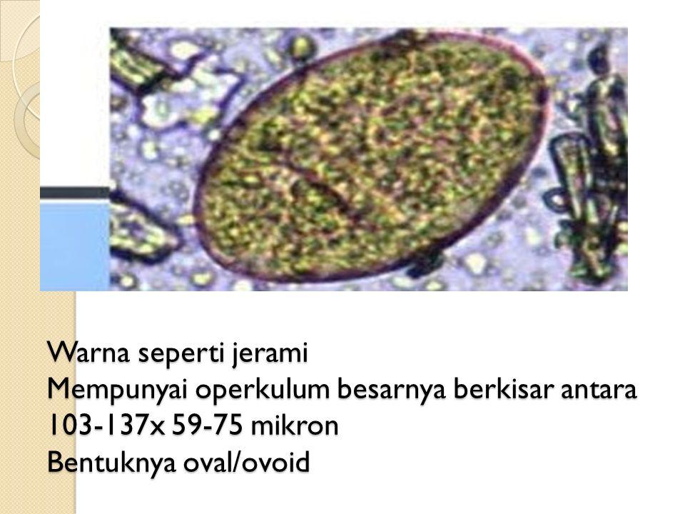 Warna seperti jerami Mempunyai operkulum besarnya berkisar antara 103-137x 59-75 mikron Bentuknya oval/ovoid
