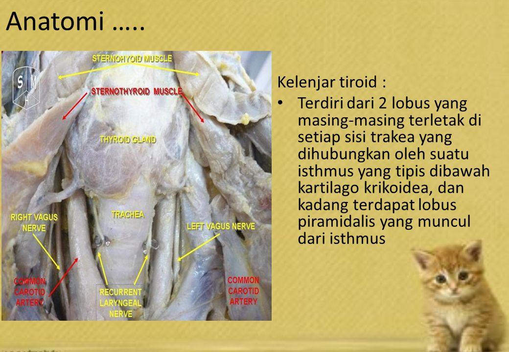 Kelenjar tiroid : Terdiri dari 2 lobus yang masing-masing terletak di setiap sisi trakea yang dihubungkan oleh suatu isthmus yang tipis dibawah kartilago krikoidea, dan kadang terdapat lobus piramidalis yang muncul dari isthmus Anatomi …..