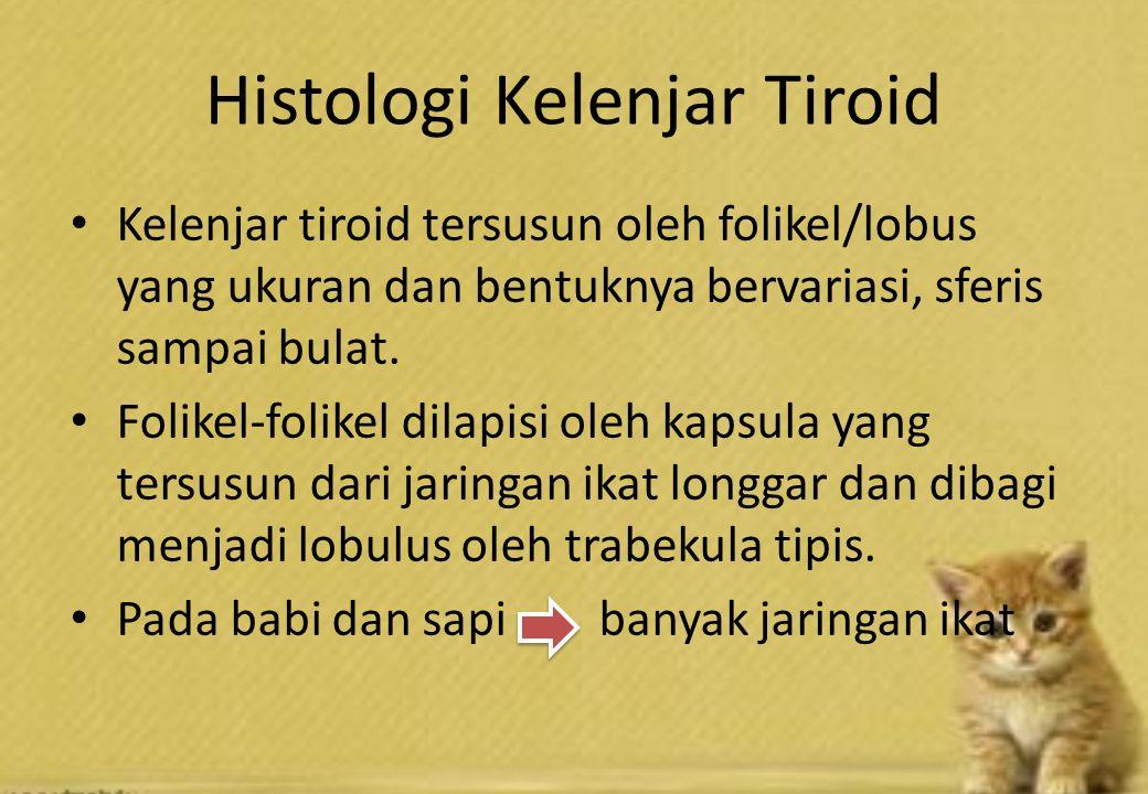 Histologi Kelenjar Tiroid Kelenjar tiroid tersusun oleh folikel/lobus yang ukuran dan bentuknya bervariasi, sferis sampai bulat.