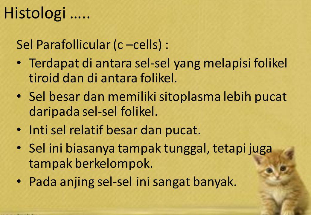 Sel Parafollicular (c –cells) : Terdapat di antara sel-sel yang melapisi folikel tiroid dan di antara folikel.