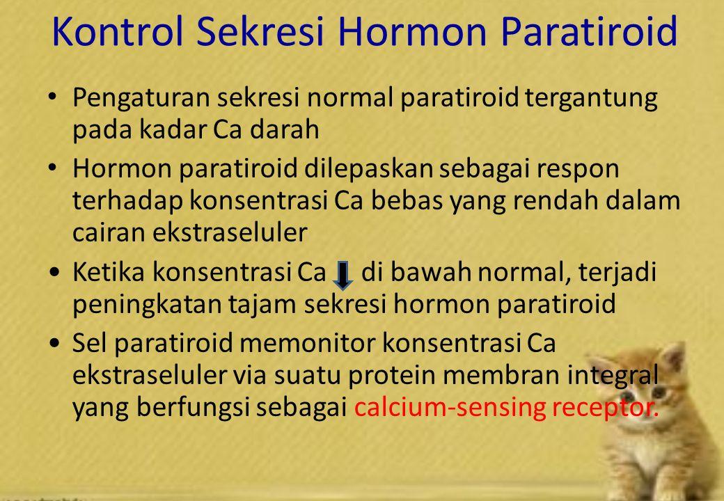 Kontrol Sekresi Hormon Paratiroid Pengaturan sekresi normal paratiroid tergantung pada kadar Ca darah Hormon paratiroid dilepaskan sebagai respon terhadap konsentrasi Ca bebas yang rendah dalam cairan ekstraseluler Ketika konsentrasi Ca di bawah normal, terjadi peningkatan tajam sekresi hormon paratiroid Sel paratiroid memonitor konsentrasi Ca ekstraseluler via suatu protein membran integral yang berfungsi sebagai calcium-sensing receptor.