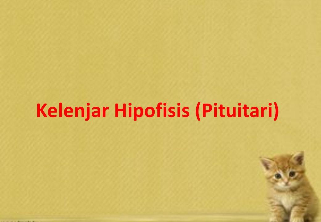 Anatomi Kelenjar Paratiroid Kelenjar Paratiroid diperlukan untuk pemanfaatan kalsium & fosfat Pelepasan hormon ini dirangsang oleh hormon yang dihasilkan oleh kelenjar adenohipofisis Kuda, sapi : menempel dan lebih pucat Kucing: tertanam di bgn kaudal