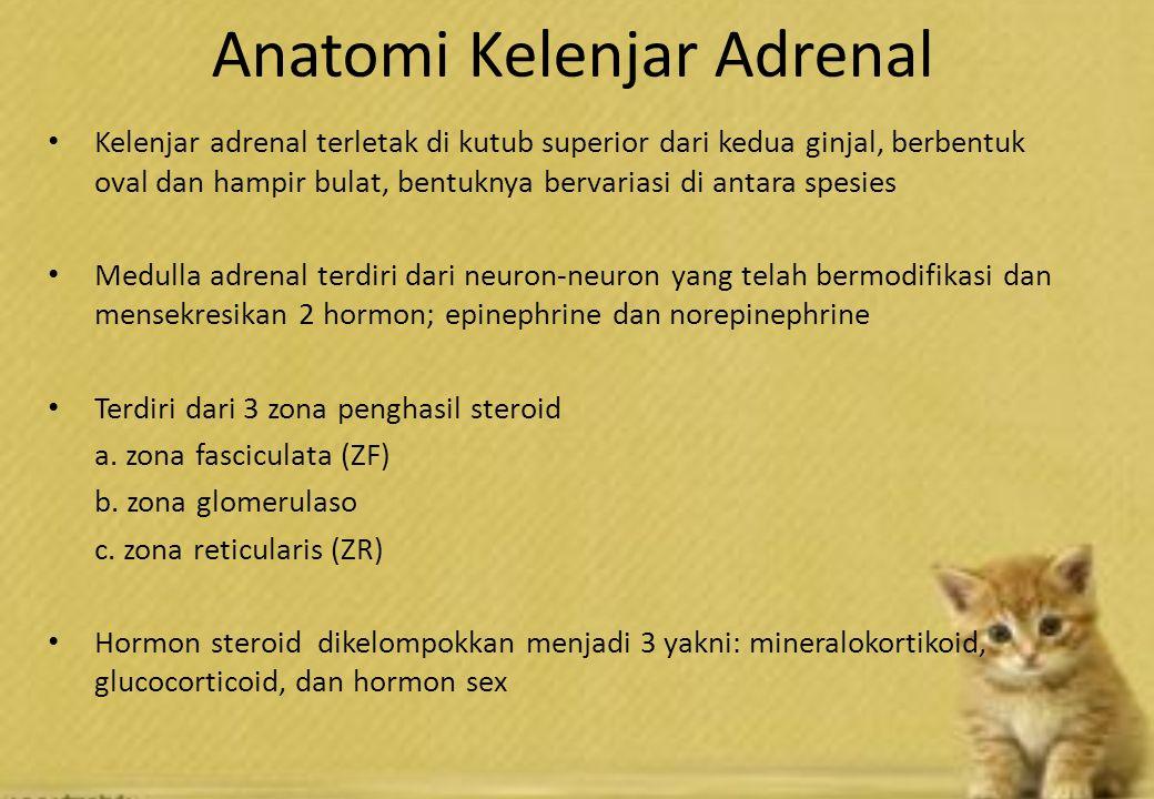 Anatomi Kelenjar Adrenal Kelenjar adrenal terletak di kutub superior dari kedua ginjal, berbentuk oval dan hampir bulat, bentuknya bervariasi di antara spesies Medulla adrenal terdiri dari neuron-neuron yang telah bermodifikasi dan mensekresikan 2 hormon; epinephrine dan norepinephrine Terdiri dari 3 zona penghasil steroid a.