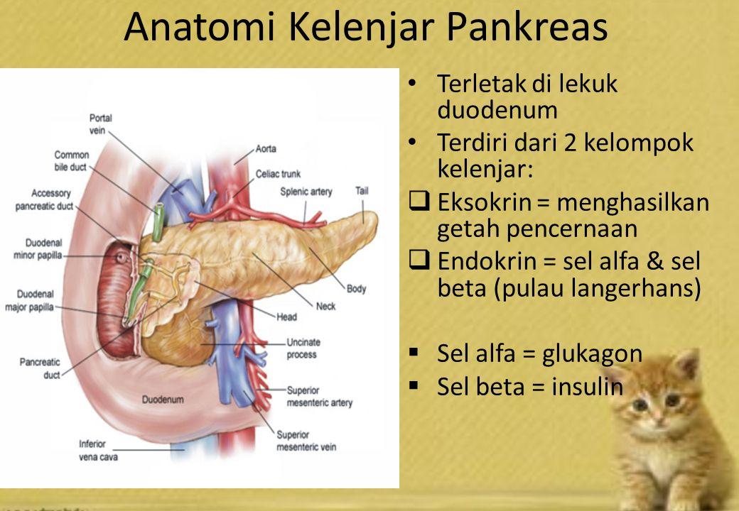 Anatomi Kelenjar Pankreas Terletak di lekuk duodenum Terdiri dari 2 kelompok kelenjar:  Eksokrin = menghasilkan getah pencernaan  Endokrin = sel alfa & sel beta (pulau langerhans)  Sel alfa = glukagon  Sel beta = insulin