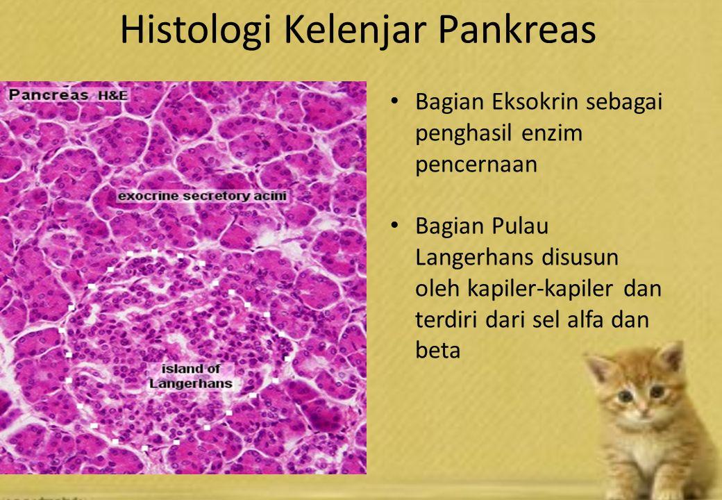 Histologi Kelenjar Pankreas Bagian Eksokrin sebagai penghasil enzim pencernaan Bagian Pulau Langerhans disusun oleh kapiler-kapiler dan terdiri dari sel alfa dan beta