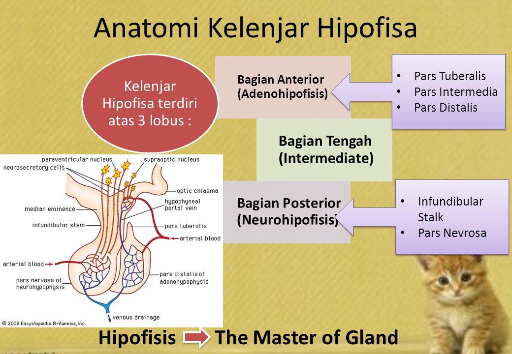 Histologi …..Adrenal Gland, Sheep Adrenal Gland, Horse.