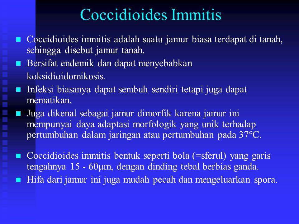 Coccidioides Immitis n n Coccidioides immitis adalah suatu jamur biasa terdapat di tanah, sehingga disebut jamur tanah. n n Bersifat endemik dan dapat