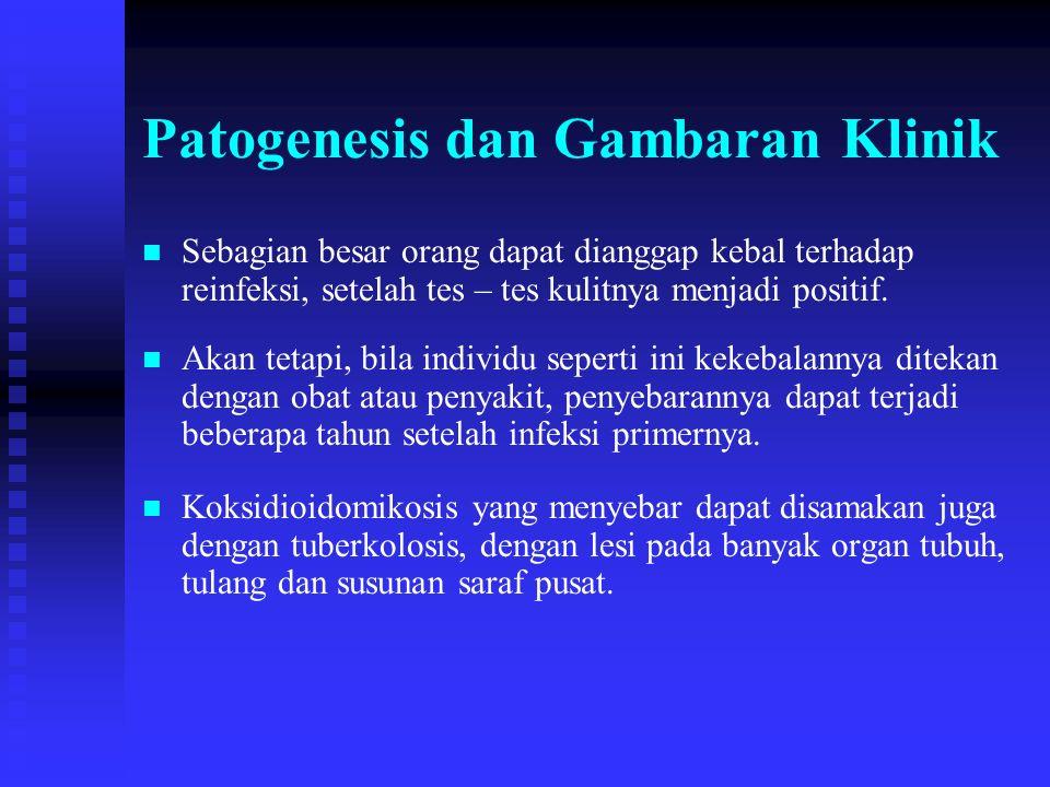 Patogenesis dan Gambaran Klinik n n Sebagian besar orang dapat dianggap kebal terhadap reinfeksi, setelah tes – tes kulitnya menjadi positif. n n Akan