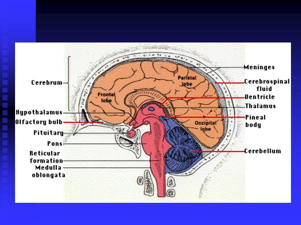 INFEKSI PADA SISTEM SYARAF PUSAT BISA DISEBABKAN OLEH SEMUA AGENT YANG INFECTIOUS : = BAKTERI - PYOGENIK PYOGENIK = MYCOBACTERIA = FUNGI = SPIROCHAETA = VIRUS