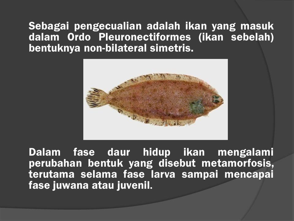 Sebagai pengecualian adalah ikan yang masuk dalam Ordo Pleuronectiformes (ikan sebelah) bentuknya non-bilateral simetris.