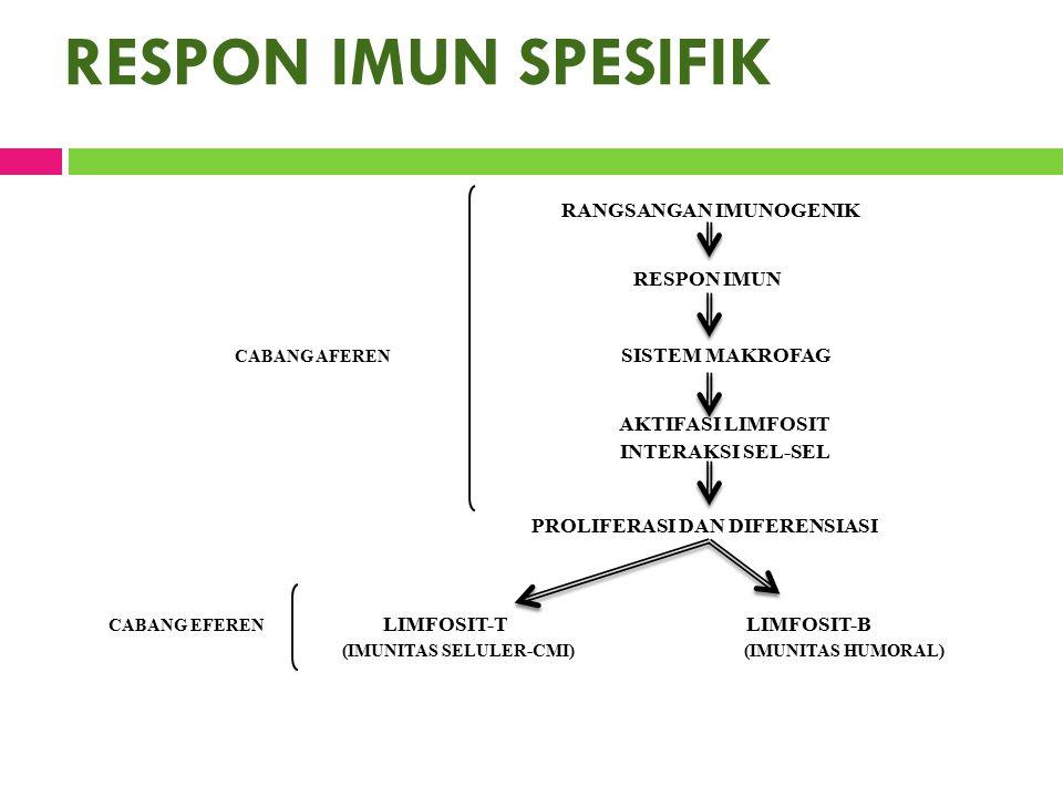 RESPON IMUN SPESIFIK RANGSANGAN IMUNOGENIK RESPON IMUN CABANG AFEREN SISTEM MAKROFAG AKTIFASI LIMFOSIT INTERAKSI SEL-SEL PROLIFERASI DAN DIFERENSIASI CABANG EFEREN LIMFOSIT-TLIMFOSIT-B (IMUNITAS SELULER-CMI) (IMUNITAS HUMORAL)