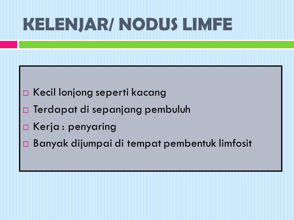KELENJAR/ NODUS LIMFE  Kecil lonjong seperti kacang  Terdapat di sepanjang pembuluh  Kerja : penyaring  Banyak dijumpai di tempat pembentuk limfosit