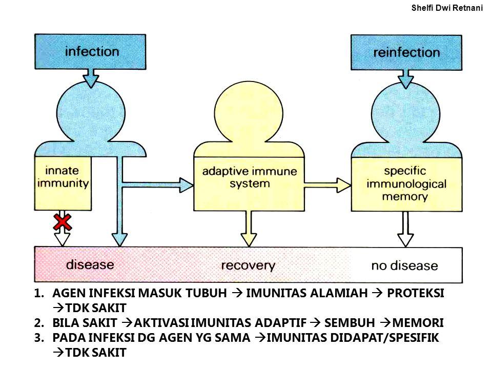 1.AGEN INFEKSI MASUK TUBUH  IMUNITAS ALAMIAH  PROTEKSI  TDK SAKIT 2.BILA SAKIT  AKTIVASI IMUNITAS ADAPTIF  SEMBUH  MEMORI 3.PADA INFEKSI DG AGEN YG SAMA  IMUNITAS DIDAPAT/SPESIFIK  TDK SAKIT Shelfi Dwi Retnani