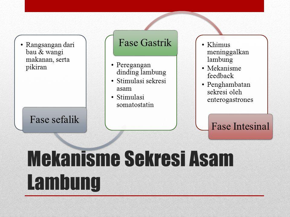Gastrin memasuki darah dan berikatan dengan reseptor gastrin. Asetilkolin dan gastrin mempromosikan pelepasan histamin dari sel mast, kemudian berikat