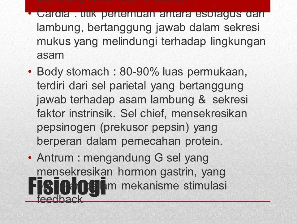 Anatomi Gastrointestinal