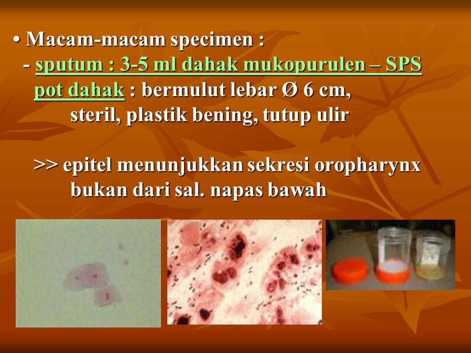Macam-macam specimen : - sputum : 3-5 ml dahak mukopurulen – SPS pot dahak : bermulut lebar Ø 6 cm, steril, plastik bening, tutup ulir >> epitel menunjukkan sekresi oropharynx bukan dari sal.