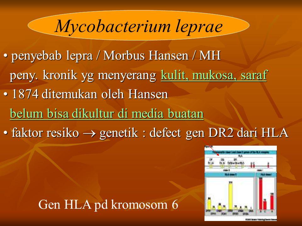 penyebab lepra / Morbus Hansen / MH penyebab lepra / Morbus Hansen / MH peny.