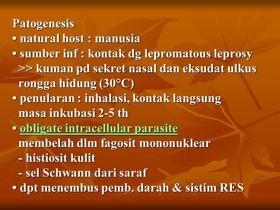 Patogenesis natural host : manusia sumber inf : kontak dg lepromatous leprosy >> kuman pd sekret nasal dan eksudat ulkus rongga hidung (30°C) penularan : inhalasi, kontak langsung masa inkubasi 2-5 th obligate intracellular parasite membelah dlm fagosit mononuklear - histiosit kulit - sel Schwann dari saraf dpt menembus pemb.