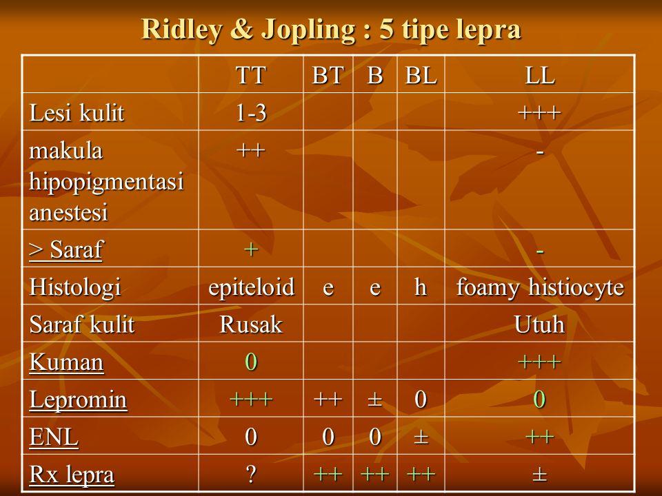 Ridley & Jopling : 5 tipe lepra TTBTBBLLL Lesi kulit 1-3+++ makula hipopigmentasi anestesi ++- > Saraf +- Histologiepiteloideeh foamy histiocyte Saraf kulit RusakUtuh Kuman0+++ Lepromin+++++±00 ENL000±++ Rx lepra ++++++±