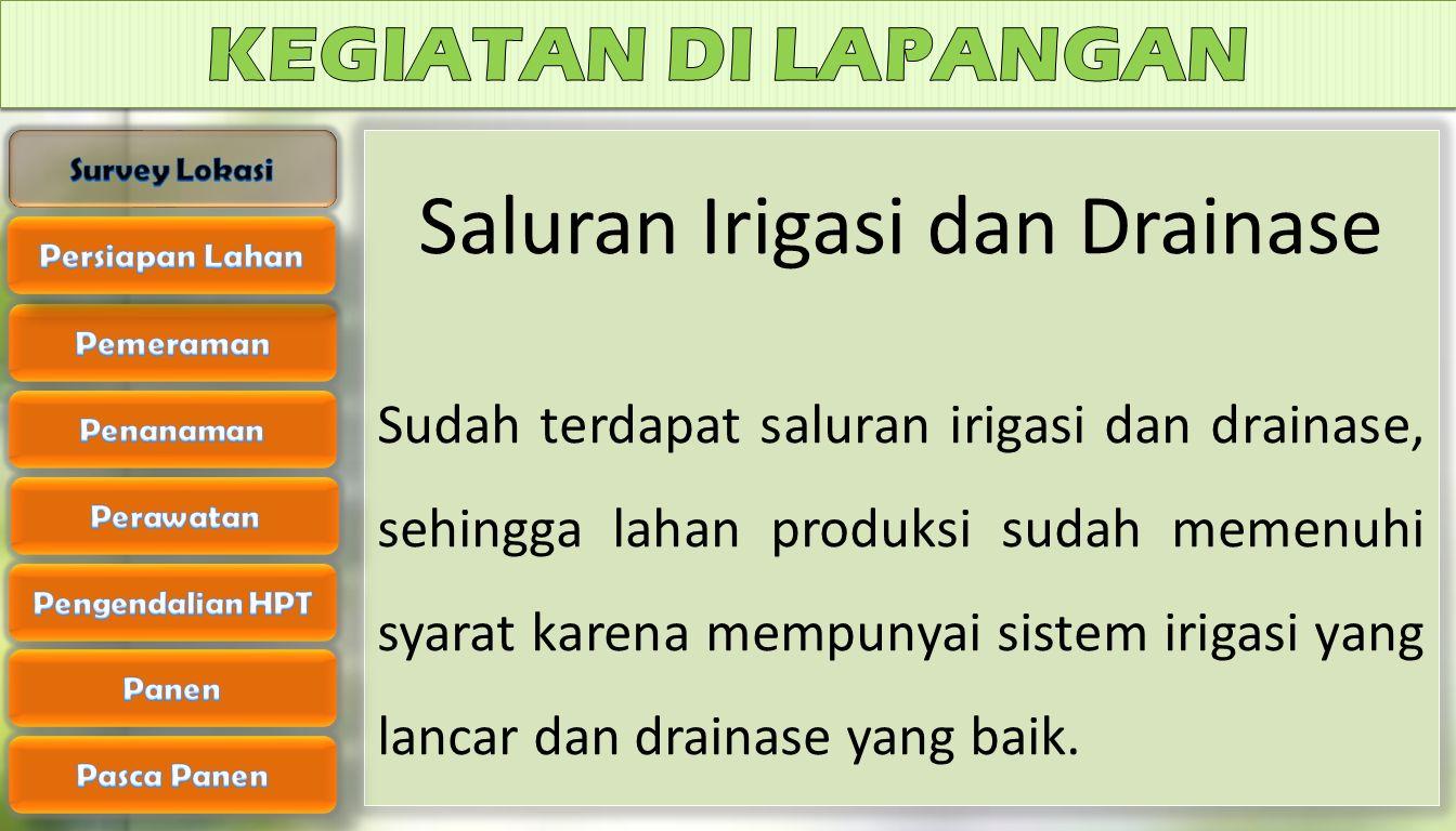 Saluran Irigasi dan Drainase Sudah terdapat saluran irigasi dan drainase, sehingga lahan produksi sudah memenuhi syarat karena mempunyai sistem irigasi yang lancar dan drainase yang baik.