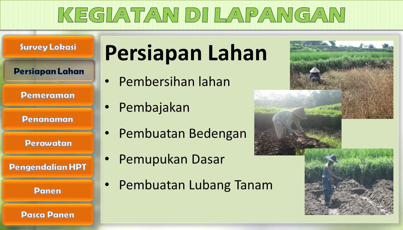 Persiapan Lahan Pembersihan lahan Pembajakan Pembuatan Bedengan Pemupukan Dasar Pembuatan Lubang Tanam