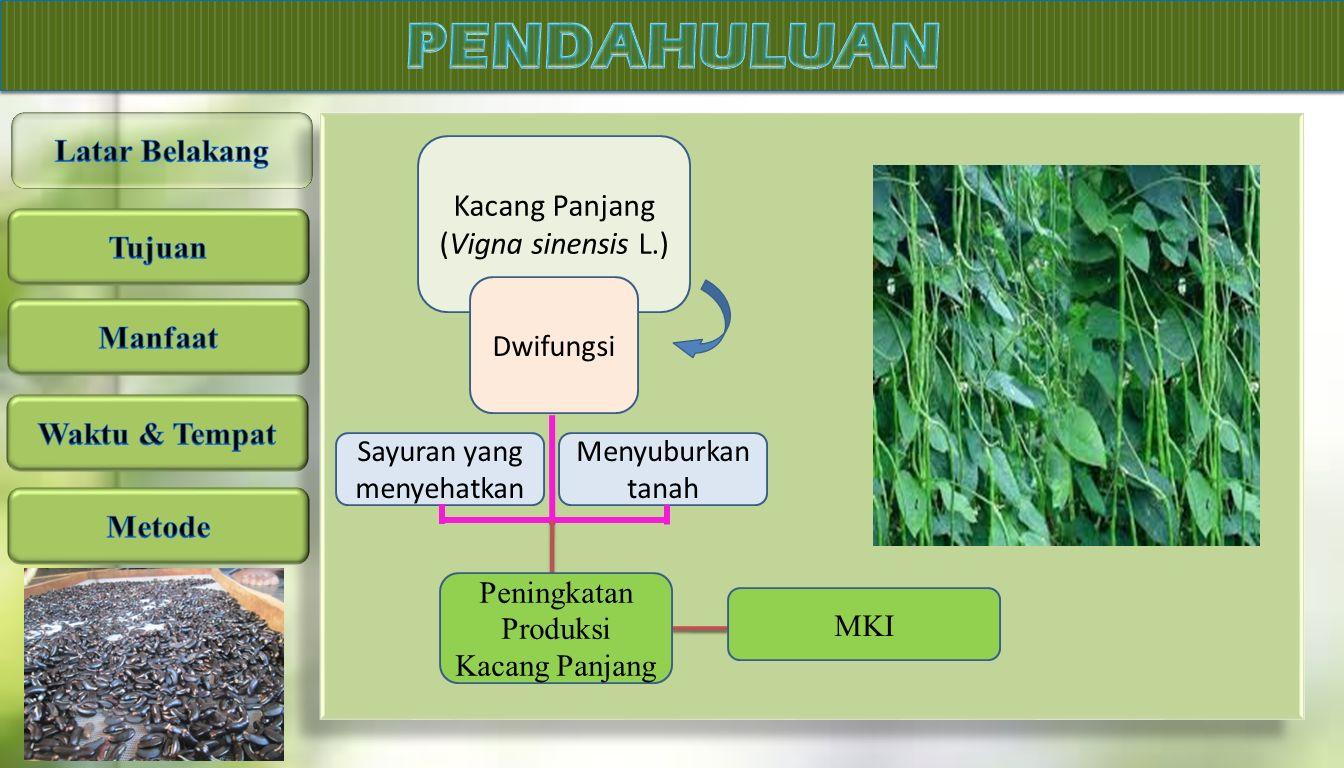 Kacang Panjang (Vigna sinensis L.) Dwifungsi Sayuran yang menyehatkan Menyuburkan tanah Peningkatan Produksi Kacang Panjang MKI