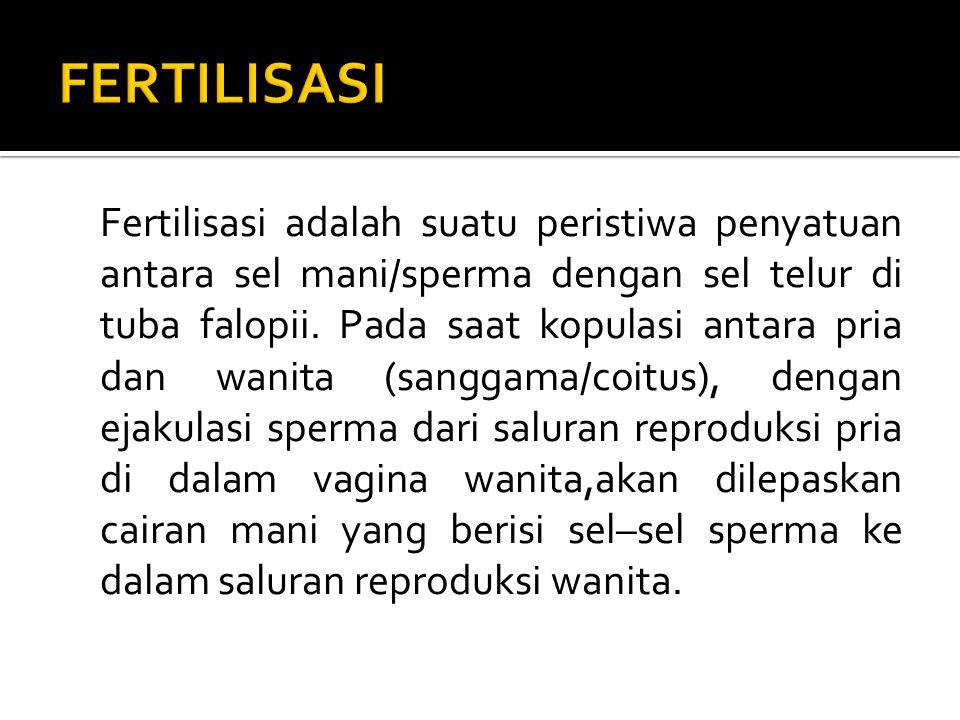 Fertilisasi adalah suatu peristiwa penyatuan antara sel mani/sperma dengan sel telur di tuba falopii.