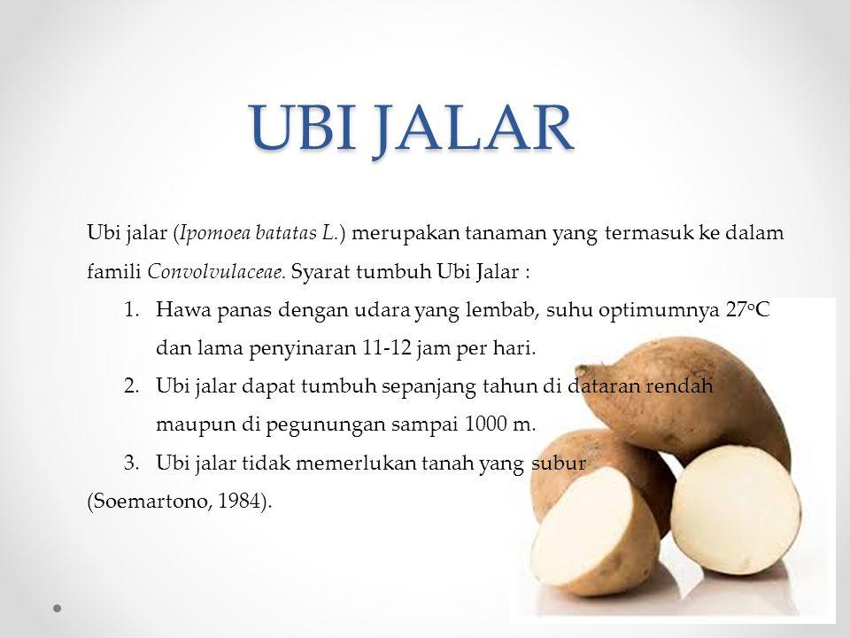 UBI JALAR Ubi jalar (Ipomoea batatas L.) merupakan tanaman yang termasuk ke dalam famili Convolvulaceae.