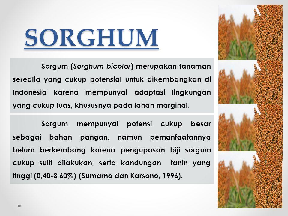 SORGHUM Sorgum ( Sorghum bicolor ) merupakan tanaman serealia yang cukup potensial untuk dikembangkan di Indonesia karena mempunyai adaptasi lingkungan yang cukup luas, khususnya pada lahan marginal.